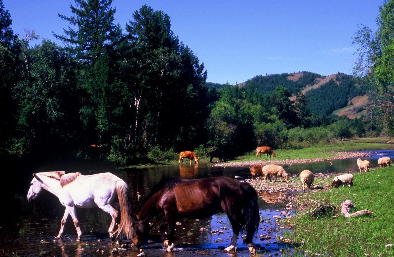 Horses drink water and eat grass. That's ecologically-sound transport.